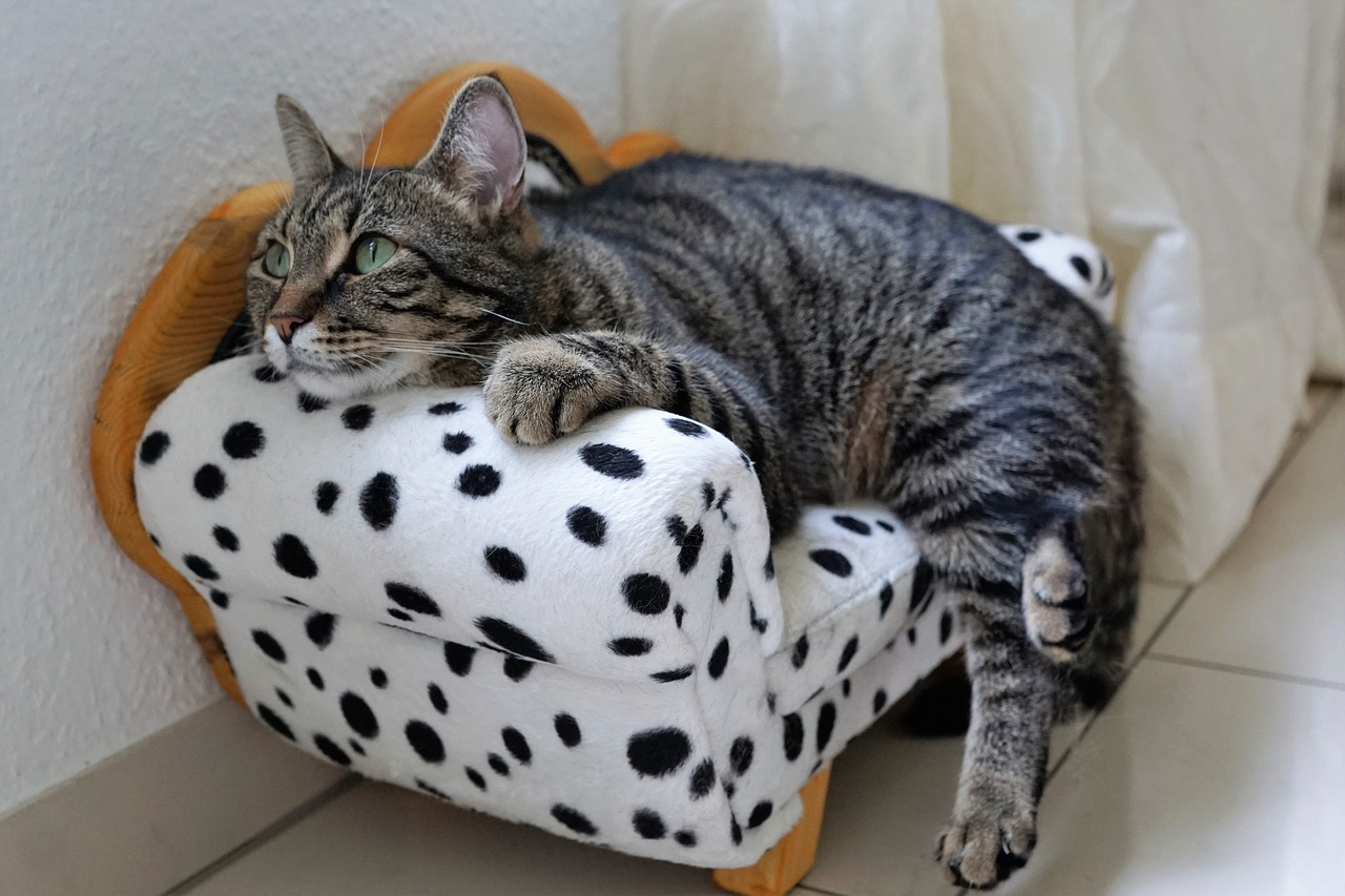 Board your cat at Best Friends Pet Care