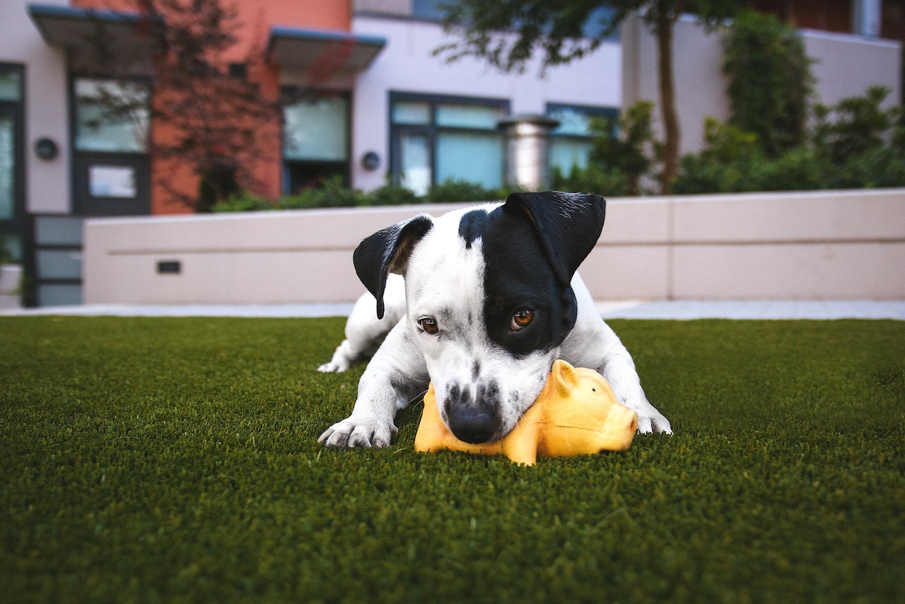 Board your dog at Best Friends Pet Care