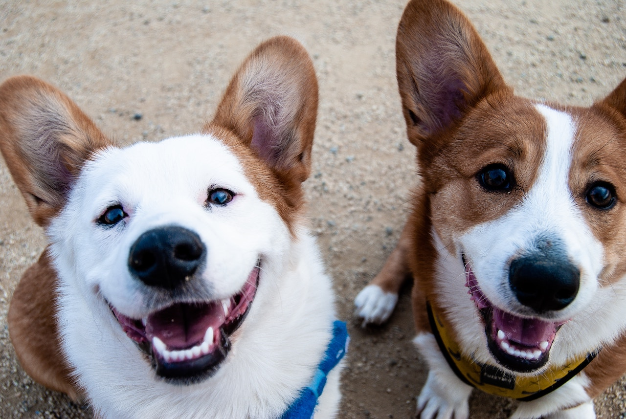 Dogs are welcomed at Disney's Pet Friendly resorts