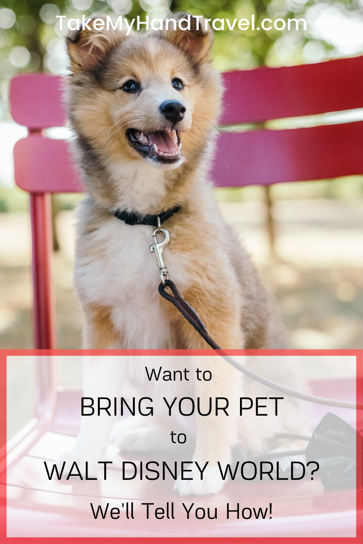 Bring Your Pet to Walt Disney World